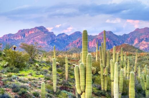 Sonoran-Desert